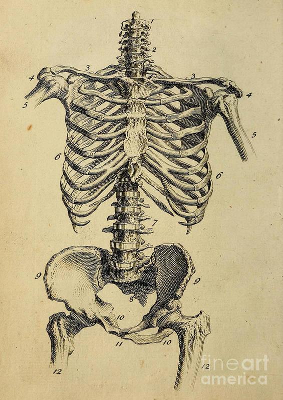 Anatomy Human Body Old Anatomical 138 Art Print By Boon Mee