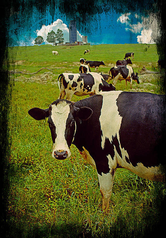 Cow On Farm Art Print featuring the photograph Cow On Farm Version - 2 by Larry Mulvehill