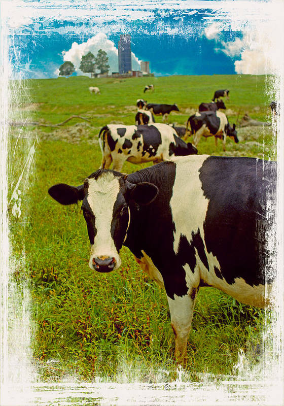 Cow On Farm Art Print featuring the photograph Cow On Farm Version - 4 by Larry Mulvehill