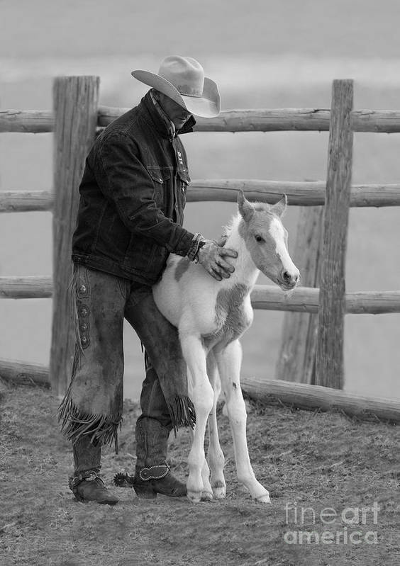 Horse Art Print featuring the photograph Cowboy Steadies Foal by Carol Walker
