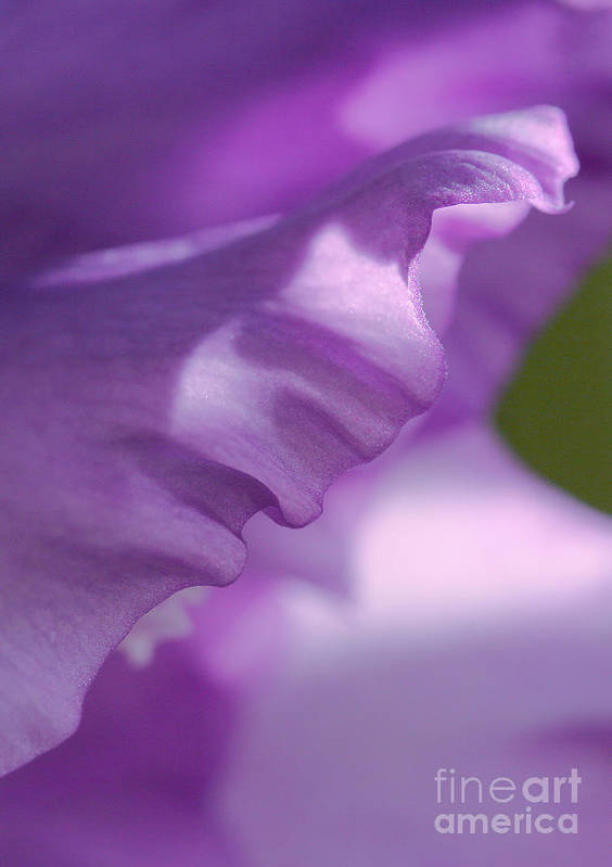 Flower Art Print featuring the photograph Face In A Glad by Steve Augustin