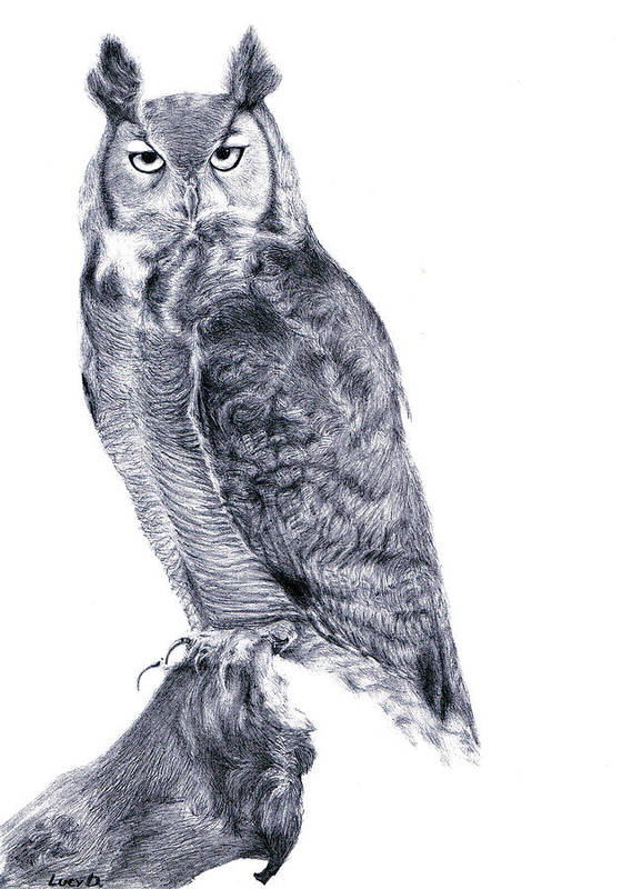 Owl Print featuring the drawing Owl by Lucy D