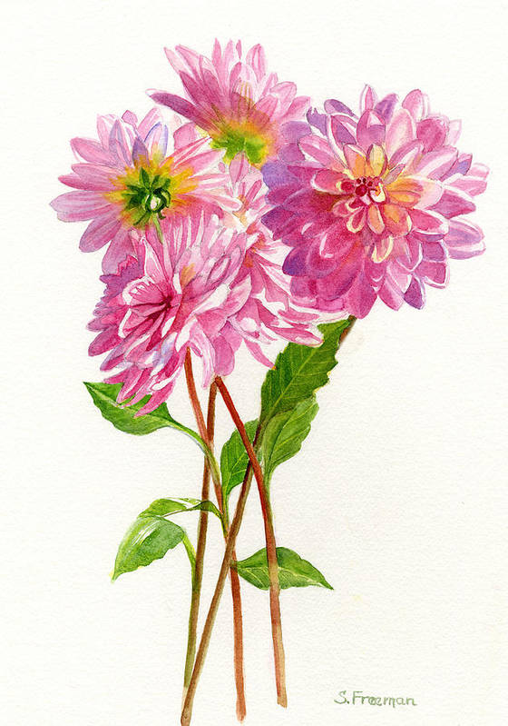 Pink Art Print featuring the painting Pink Dahlias by Sharon Freeman