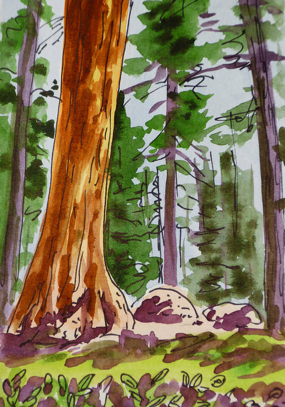 Sketchbook Art Print featuring the painting Sequoia Park - California Sketchbook Project by Irina Sztukowski