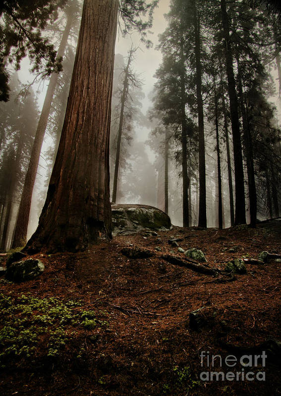 Landscape Art Print featuring the photograph Forest Floor And Fog by Susan Gary