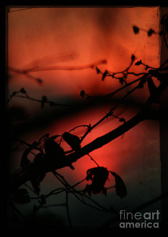 Sunset Art Print featuring the photograph The Sunset by Angel Ciesniarska