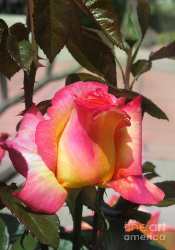 Rose Art Print featuring the photograph Aurora Color Rose Bud. Wow by Sofia Metal Queen