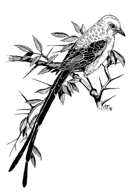 Bird Art Print featuring the drawing Bird by Stephen Taylor