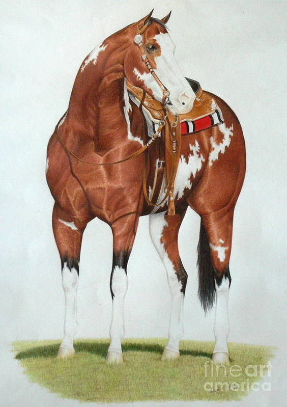 Paint Pinto Overo Bay Western Stallion Saddles Equine Horse Stock Art Print featuring the drawing Blazing Saddles by Louise Green
