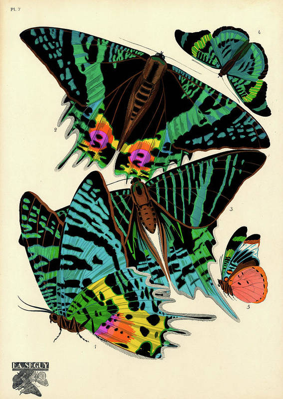 Blue Butterfly Art Print featuring the painting Butterflies, Plate-7 by Painter of the 19th century