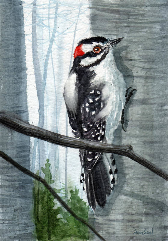 Birds Art Print featuring the painting Downey Woodpecker by Sean Seal