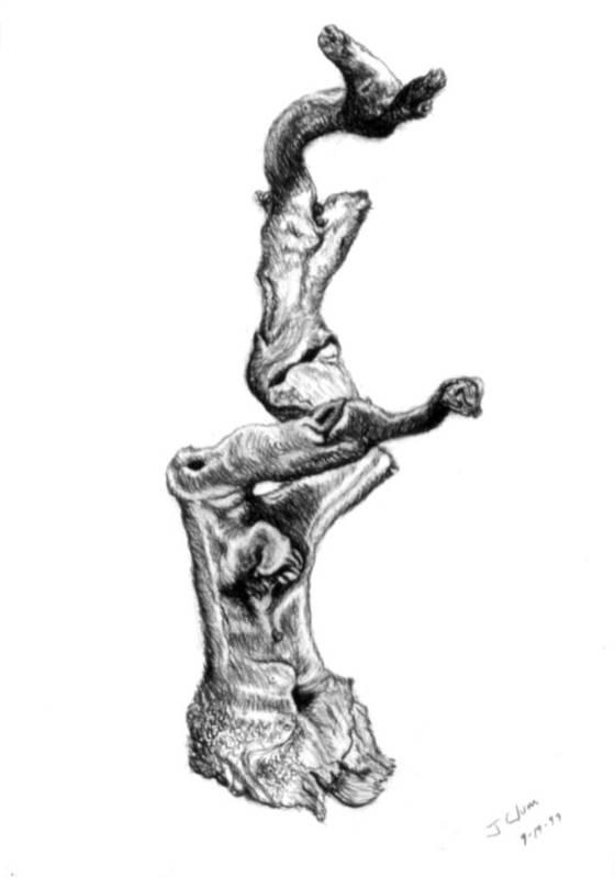 Driftwood Art Print featuring the drawing Driftwood by John Clum