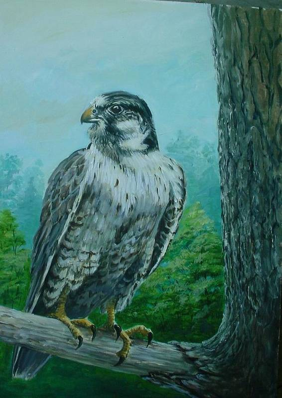 Wildlife Art Print featuring the painting Falcon by Perrys Fine Art