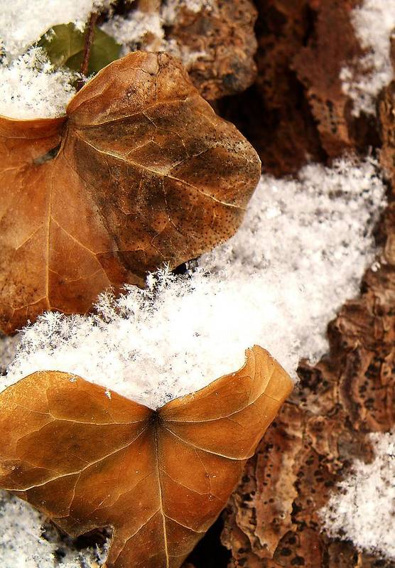 Fall Art Print featuring the photograph Fall And Winter by Gaby Swanson