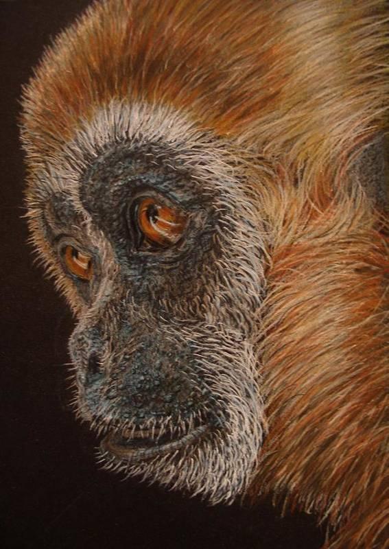 Animals Art Print featuring the drawing Gibbon by Karen Ilari