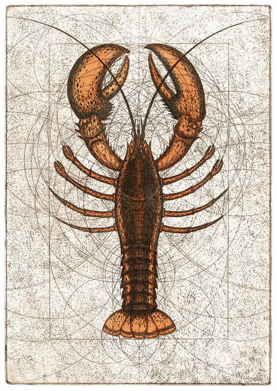 Lobster Art Print featuring the painting Northern Lobster by Charles Harden