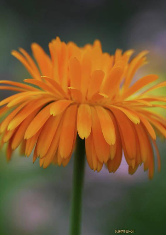 Art Print featuring the photograph Orange Glow by Deborah Benoit