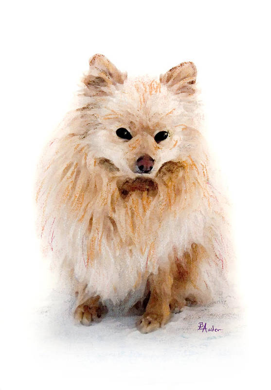 Pomeranian Art Print featuring the pastel Pip by Brent Ander
