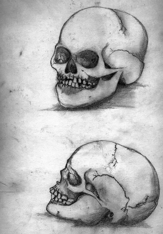Skull Art Print featuring the drawing Skull Drawing by Alban Dizdari
