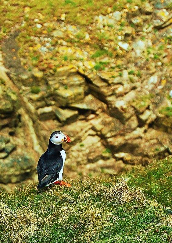 Puffin Art Print featuring the photograph Solitaire by HweeYen Ong