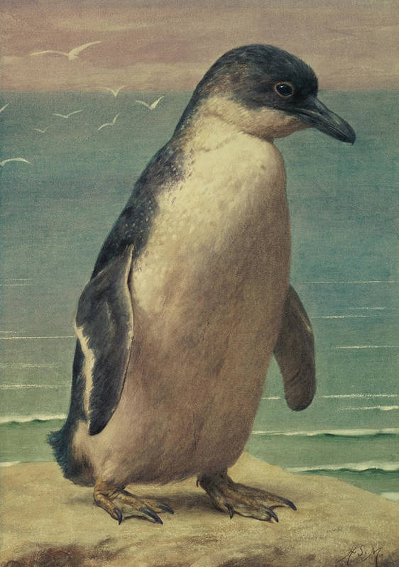 Study Art Print featuring the painting Study Of A Penguin by Henry Stacey Marks