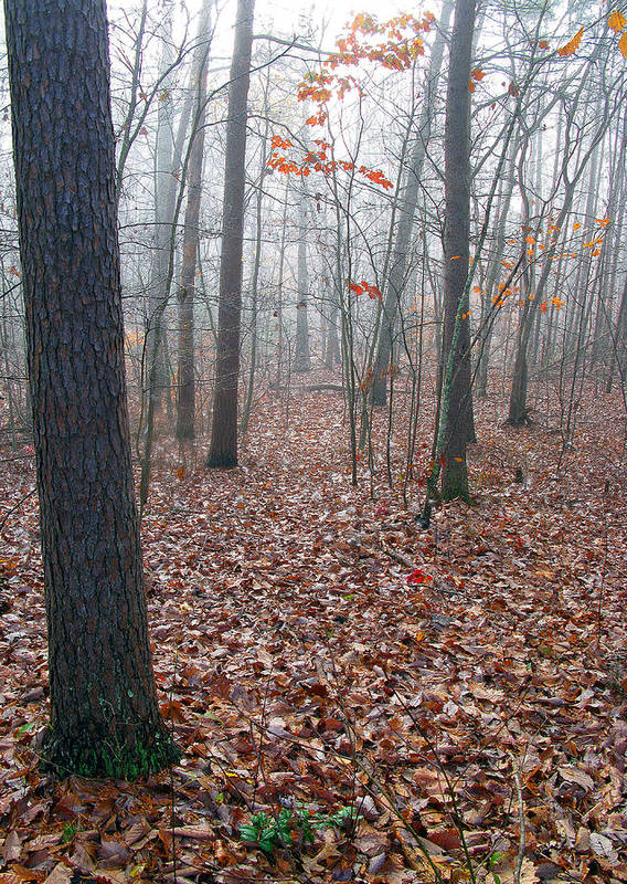 Trees Art Print featuring the photograph Trees In Foggy Fall Woods by Richard Singleton