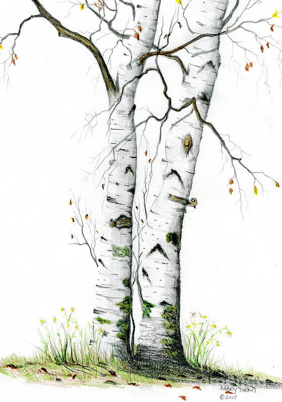 White Birch Art Print featuring the painting White Birch by Mary Tuomi