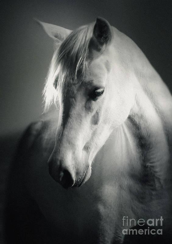 574f1d55cda Horse Art Print featuring the photograph White Horse Head Art Portrait by Dimitar  Hristov