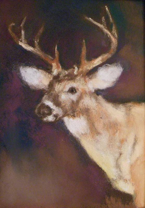 White Tail Deer Art Print featuring the painting White Tail Buck by Debbie Anderson