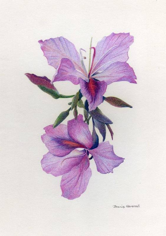 Colored Pencil Art Print featuring the drawing Wild Orchids by Bonnie Haversat