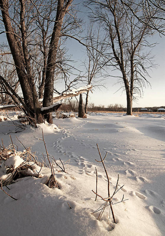 Winter Art Print featuring the photograph Winters Tracks by Michael Wessel