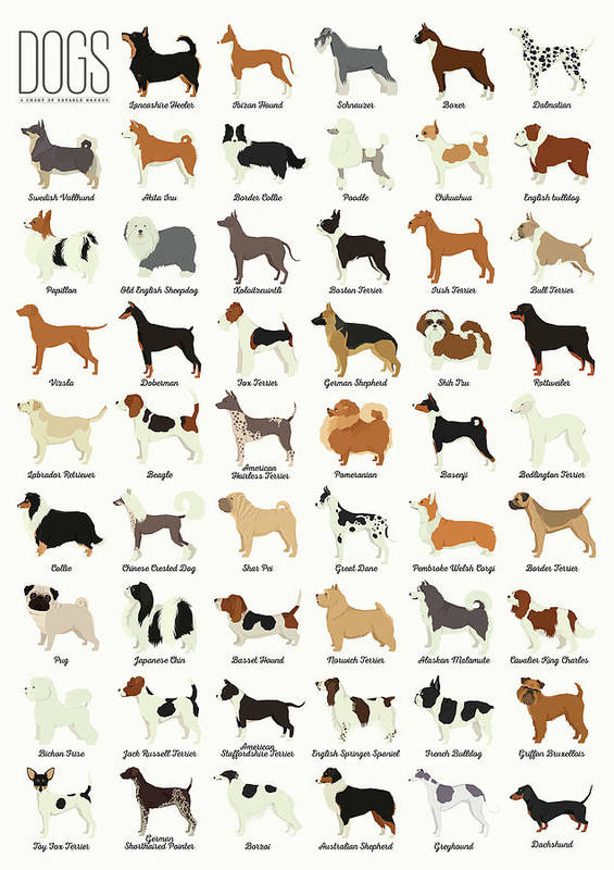 Dogs Art Print featuring the digital art Dog Breeds by Zapista OU
