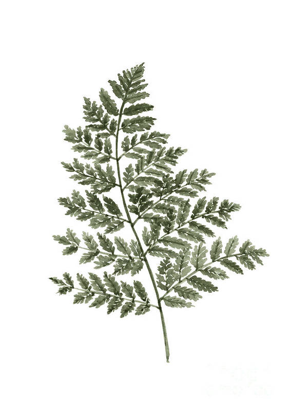 Fern Twig Art Print featuring the painting Fern Twig Illustration Grey Plant Watercolor Painting by Joanna Szmerdt