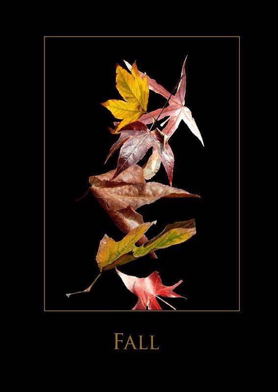 Art Print featuring the photograph Fall by Richard Gordon