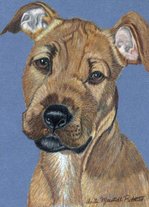 Dog Art Print featuring the painting American Pit Bull Terrier Puppy by Anita Putman