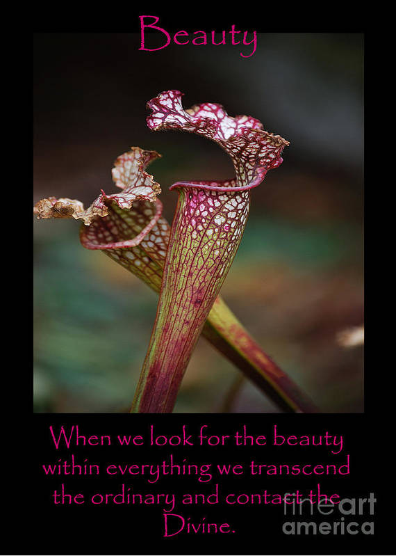 Pitcher Plants Art Print featuring the photograph Beauty Pitcher Plants by Victoria Page
