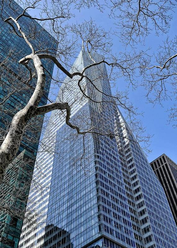 Nyc Art Print featuring the photograph Branching Out by Tony Ambrosio