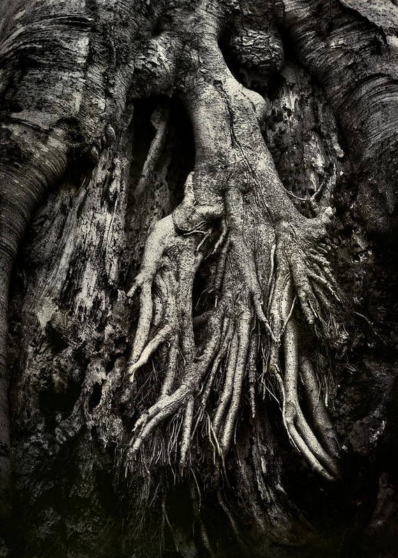 Tree Print featuring the photograph Kneeling At The Feet Of The Green Man by Rebecca Sherman