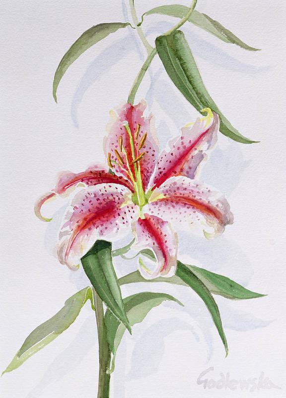 Botanical: Flowers 19th Art Print featuring the painting Lily by Izabella Godlewska de Aranda