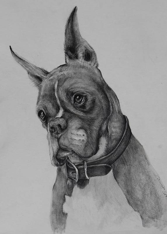 Boxer Dog Art Print featuring the drawing Maverick by Jean Cormier
