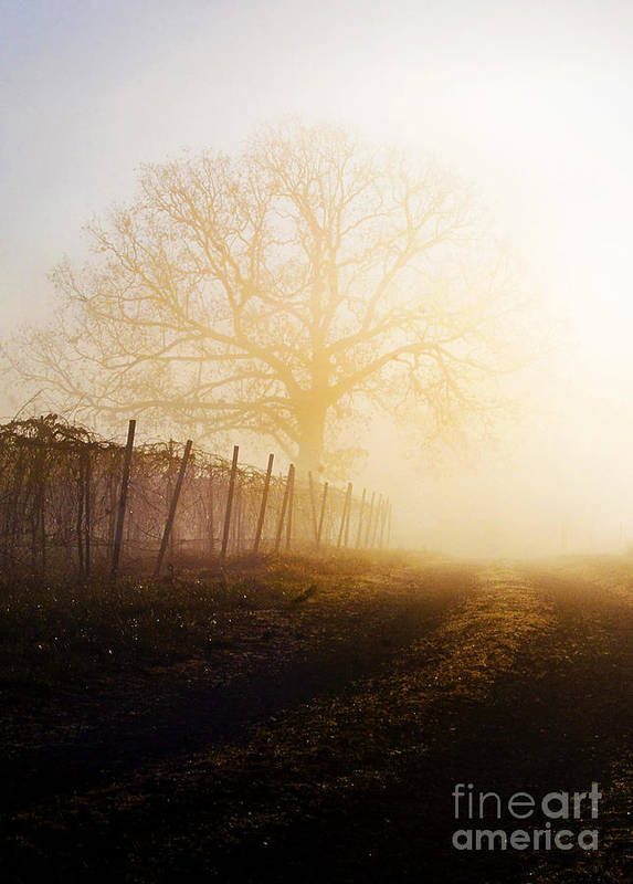 Fog Art Print featuring the photograph Morning Vineyard by Shannon Beck-Coatney