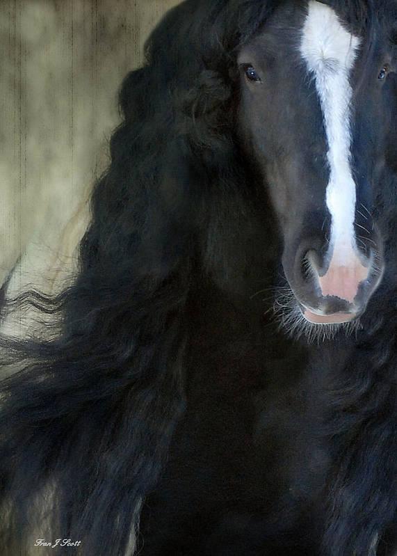 Gypsy Stallion Art Print featuring the photograph Valentino Dreams by Fran J Scott