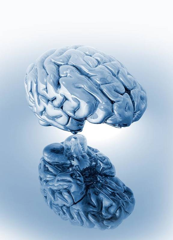 Artwork Art Print featuring the photograph Human Brain, Artwork by Victor Habbick Visions