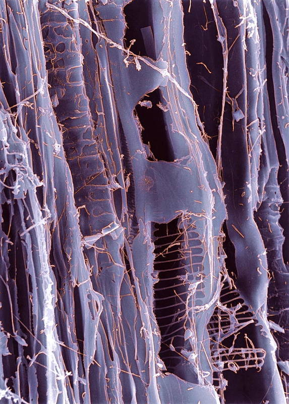 Plywood Art Print featuring the photograph Rotten Wood, Sem by Dr Jeremy Burgess