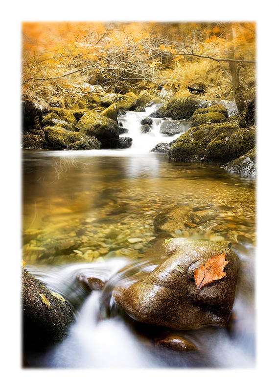 Autumn Print featuring the photograph Autumnal Stream by Mal Bray