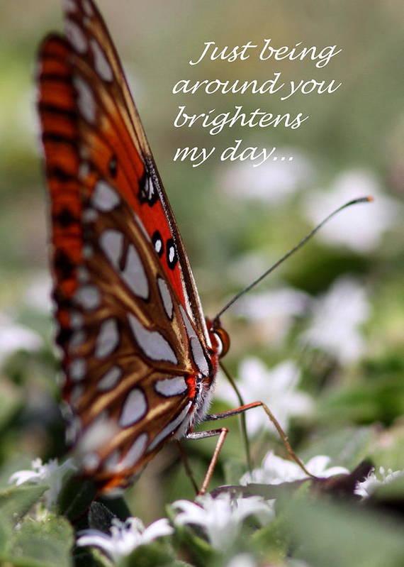 Friends Art Print featuring the photograph Butterfly Friendship Card by Travis Truelove