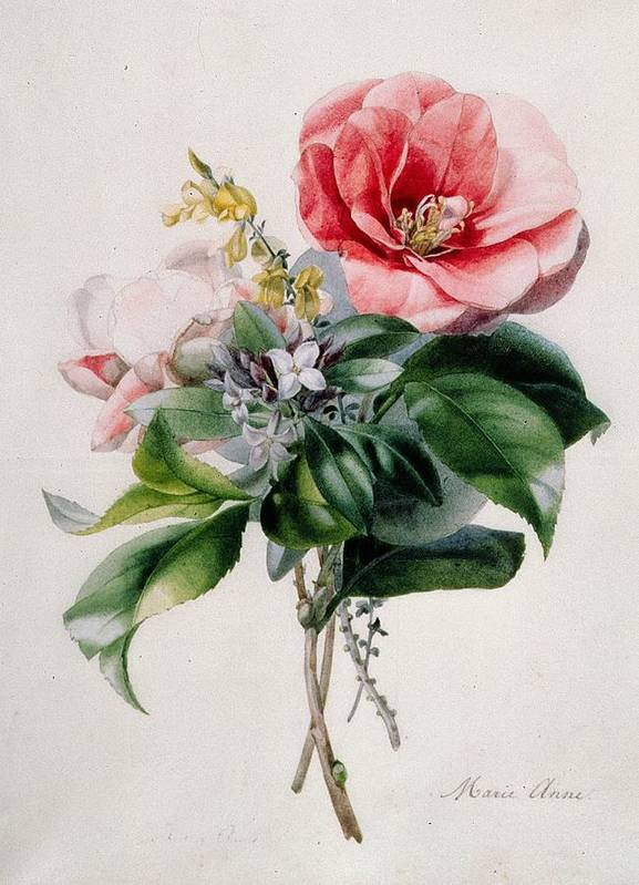 Camellia And Broom Art Print featuring the painting Camellia And Broom by Marie-Anne