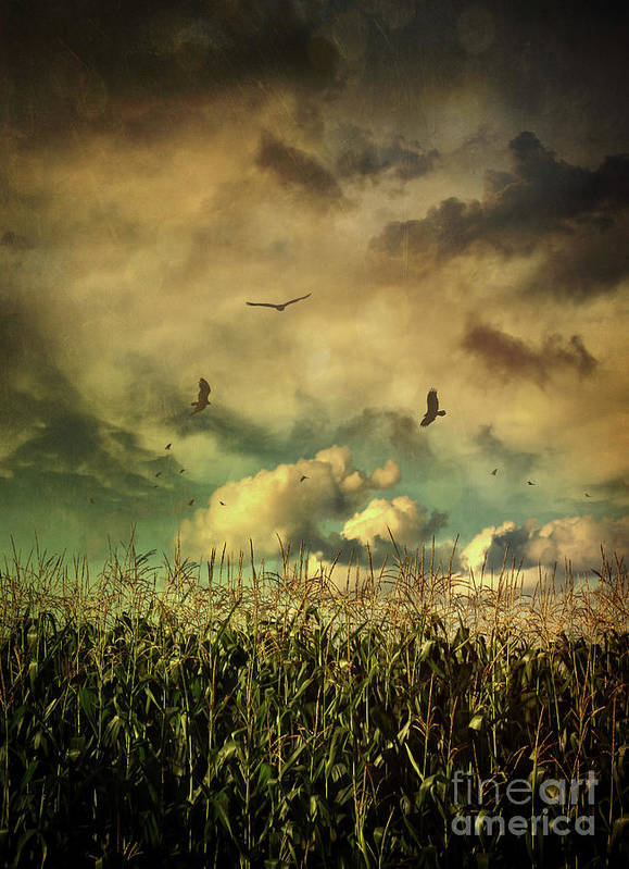Atmospheric Art Print featuring the photograph Cornfield In Summer With Dark Skies by Sandra Cunningham