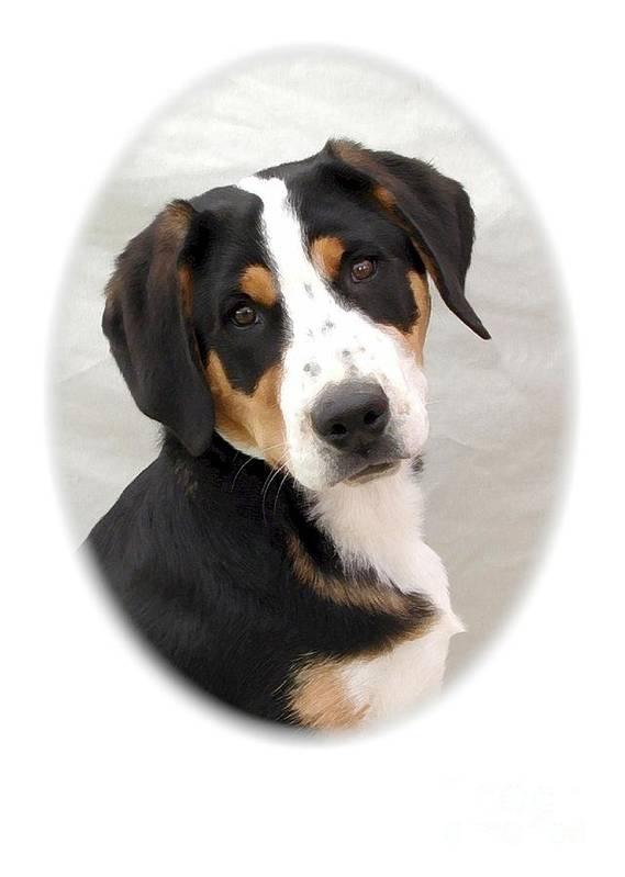 Greater Swiss Mountain Dog Digital Art Art Print featuring the digital art Greater Swiss Mountain Dog 1255 by Larry Matthews