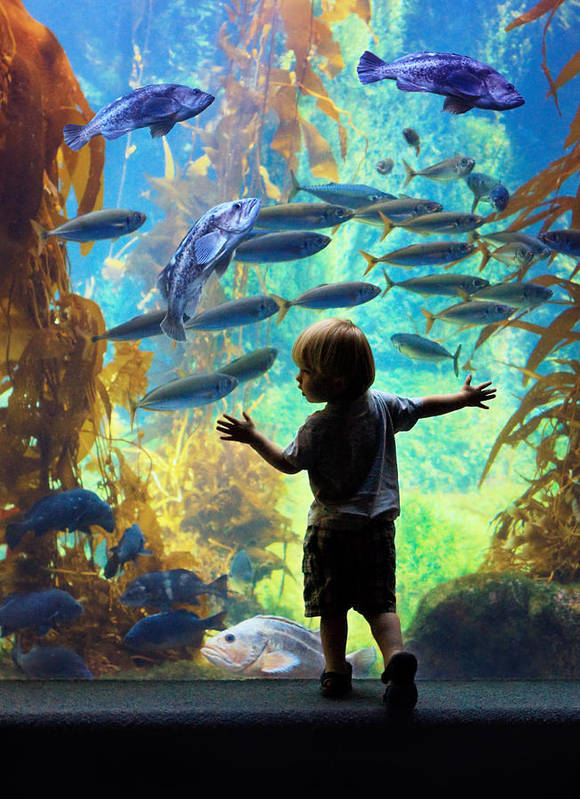 Aquarium Art Print featuring the photograph Immersion by Donna Pagakis